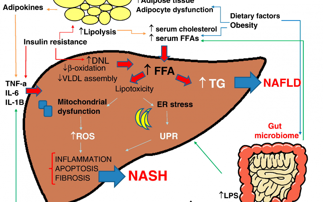 Role of Vitamins for the Treatment of NASH