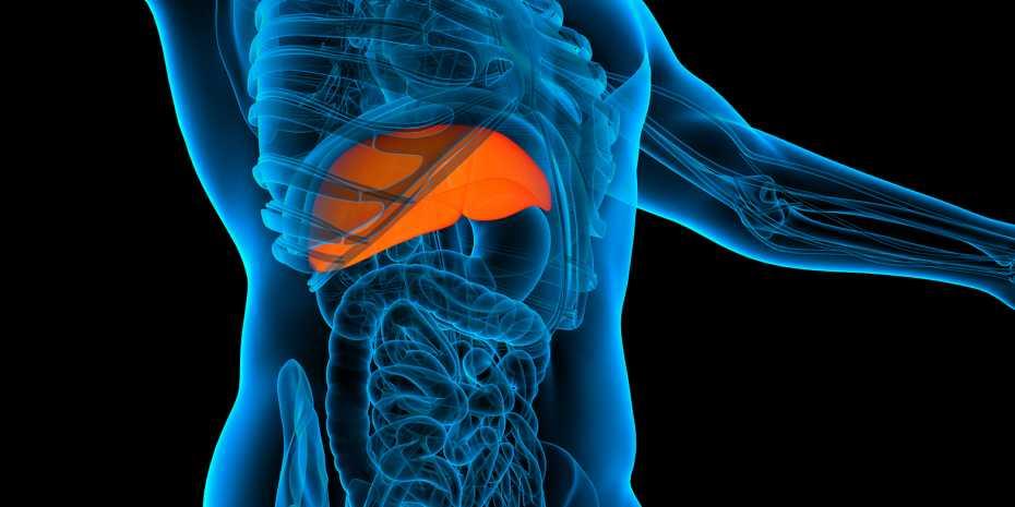Can Fatty Liver Regenerate